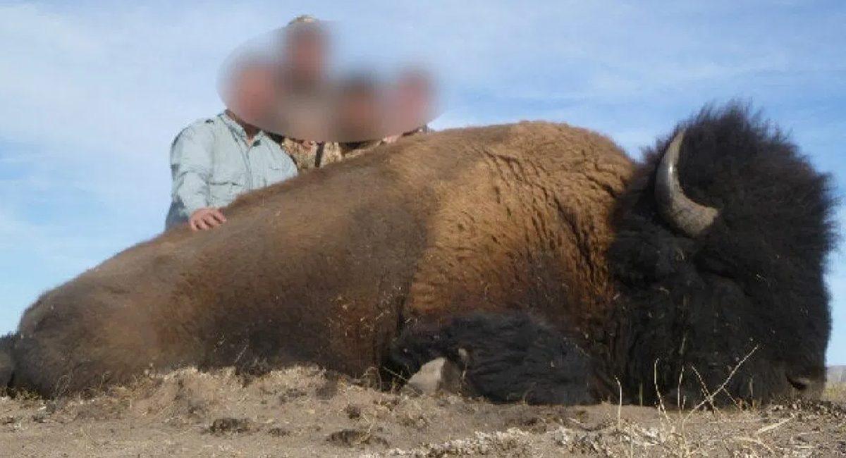caza de bisonte