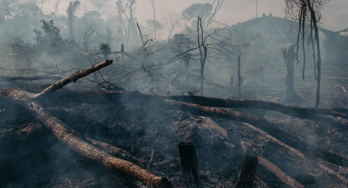 deforestando vidas
