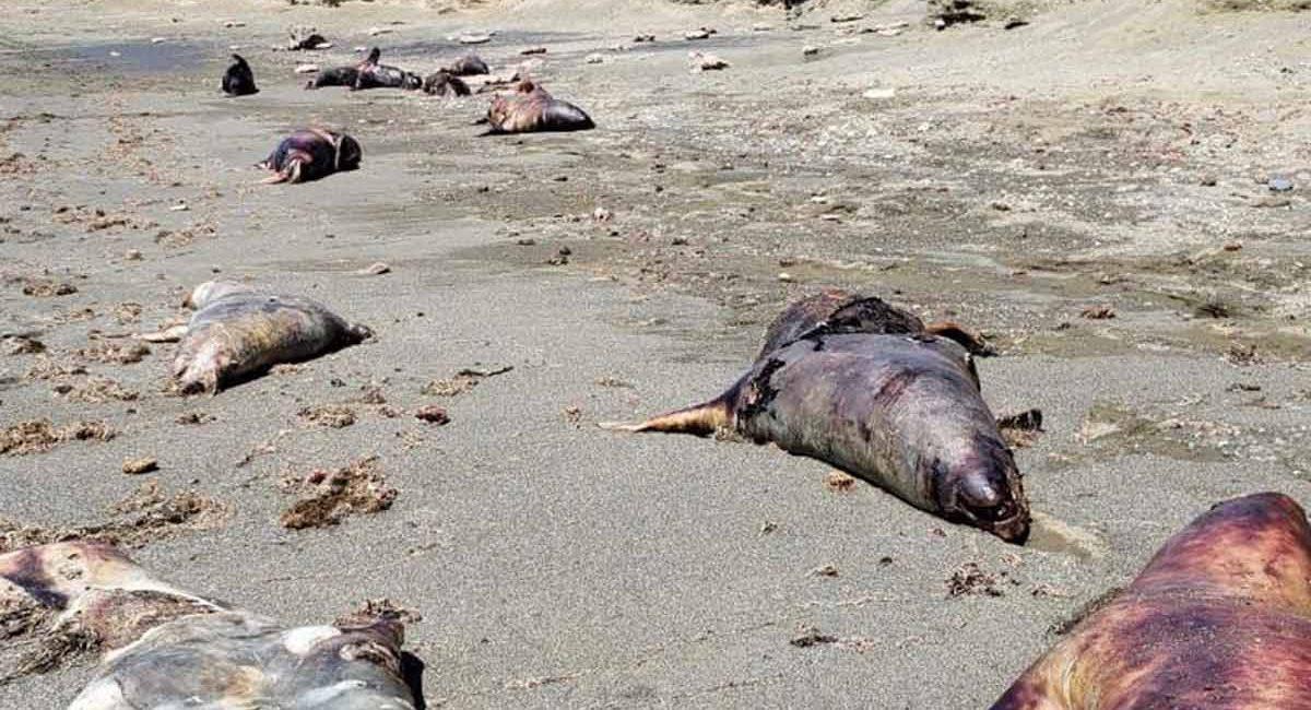 lobos marinos bcs