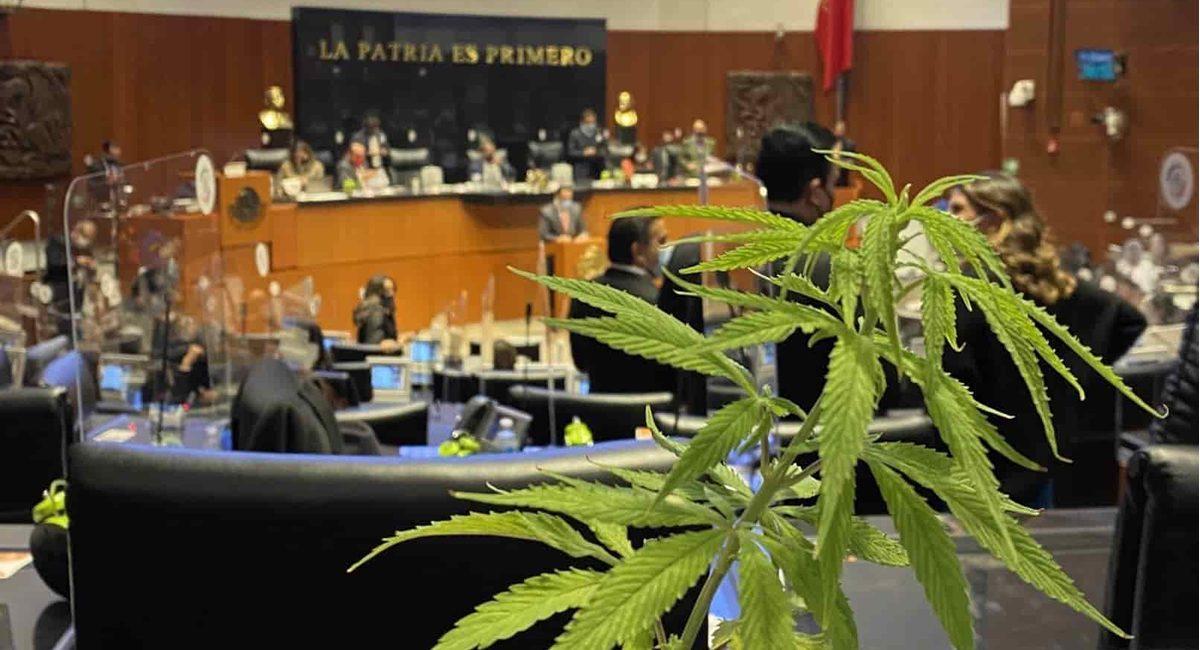 meixco cannabis senado
