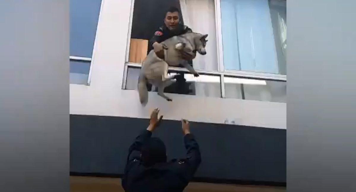 rescate perro
